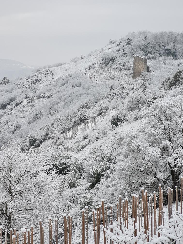Domaine Lombard hiver vignes côtes du rhône