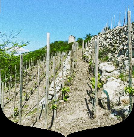 syrah vin du rhône vallée du rhône meilleur domaine du rhône vin bio du rhône