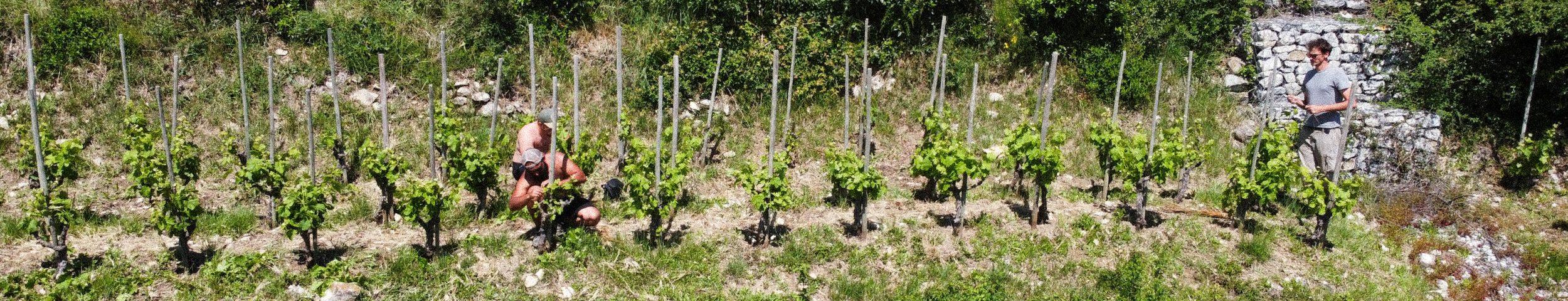les vignerons de domaine Lombard vallée de Rhône